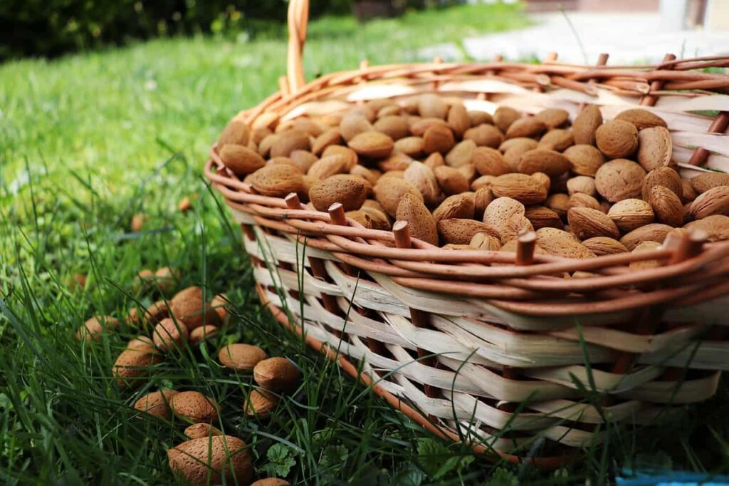 Bitter Almonds: Here's why you Shouldn't Eat Bitter Almonds Everyday