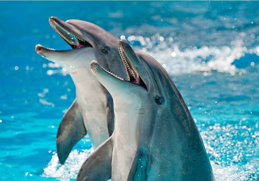 10 Facts about Dolphins you Probably Didn't Know