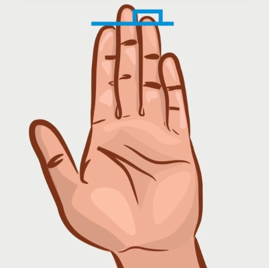 The index finger is shorter than the ring finger